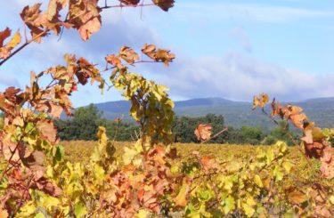 vignoble-automne-carcassonne8)