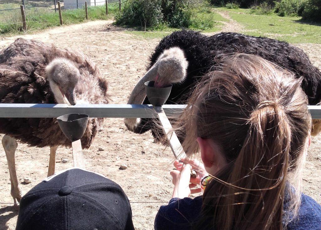 carcassonne-famille-enfants Parc Australien Aude