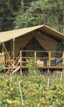 lodges-tentes-vignes-vigneron-dormir-insolite-carcassonne-minervois