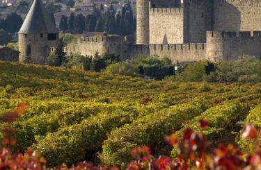 Cite-Carcassonne-vignes
