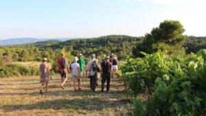 Balades Vigneronnes , les vignerons vous invitent