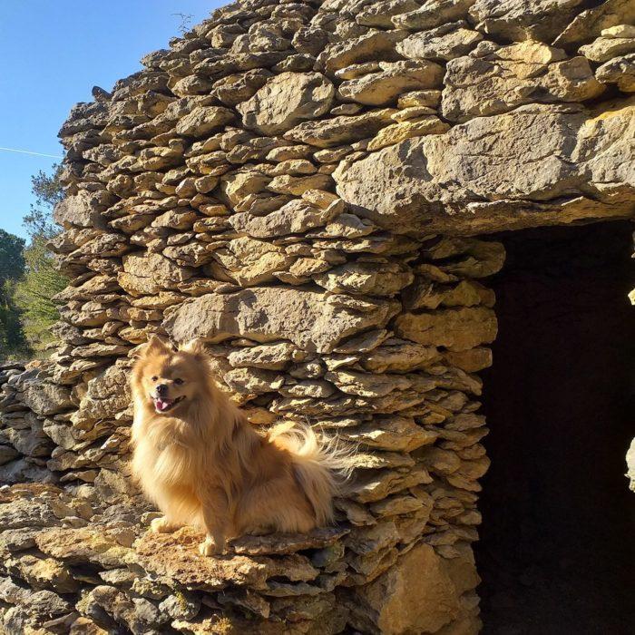 vacances-avec-mon-chien-pet-friendly-animaux-carcassonne