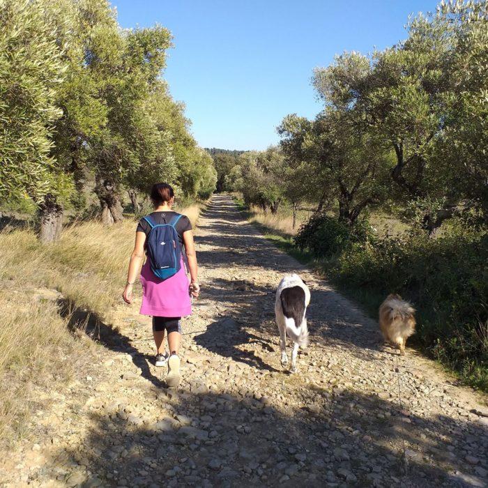 randonnee-balade-chien-carcassonne-villarzel-cabardes