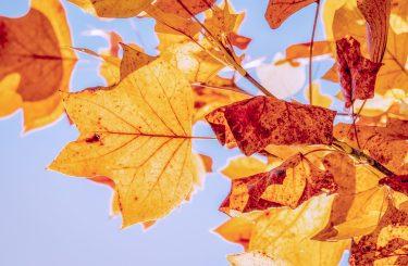 automne-carcassonne-visiter-tourisme-octobre-toussaint