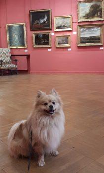 chiens-acceptes-carcassonne