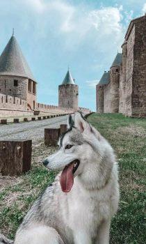 emmene-ton-chien-carcassonne