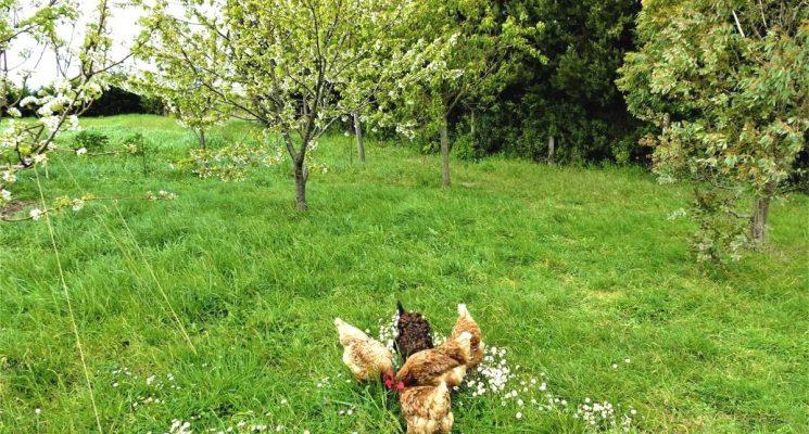 CHALET MELEZE poules