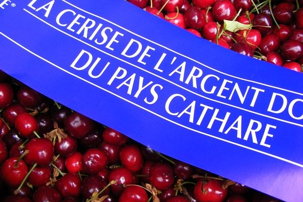 CERISE DU PAYS CATHARE