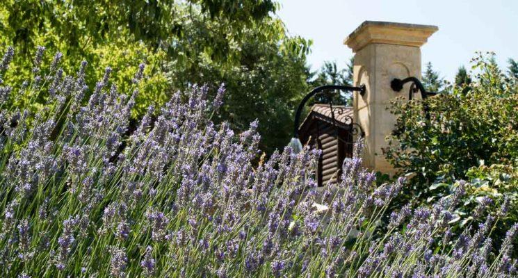Moulin de Sainte-Anne-Villegly_2