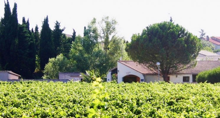 Villa-en-Cazilhac-vignes-2