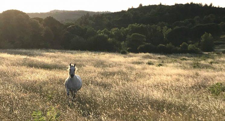 le-cheval-par-nature